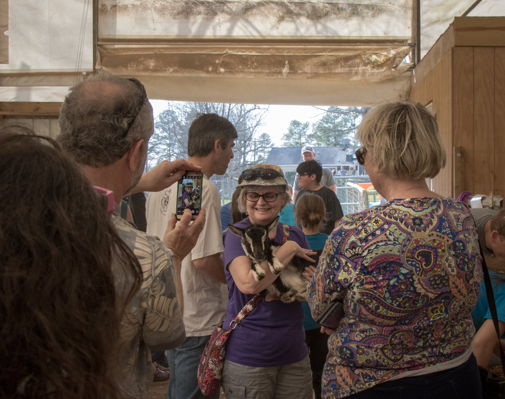 Celebrity Dairy Goat Farm, February 2017