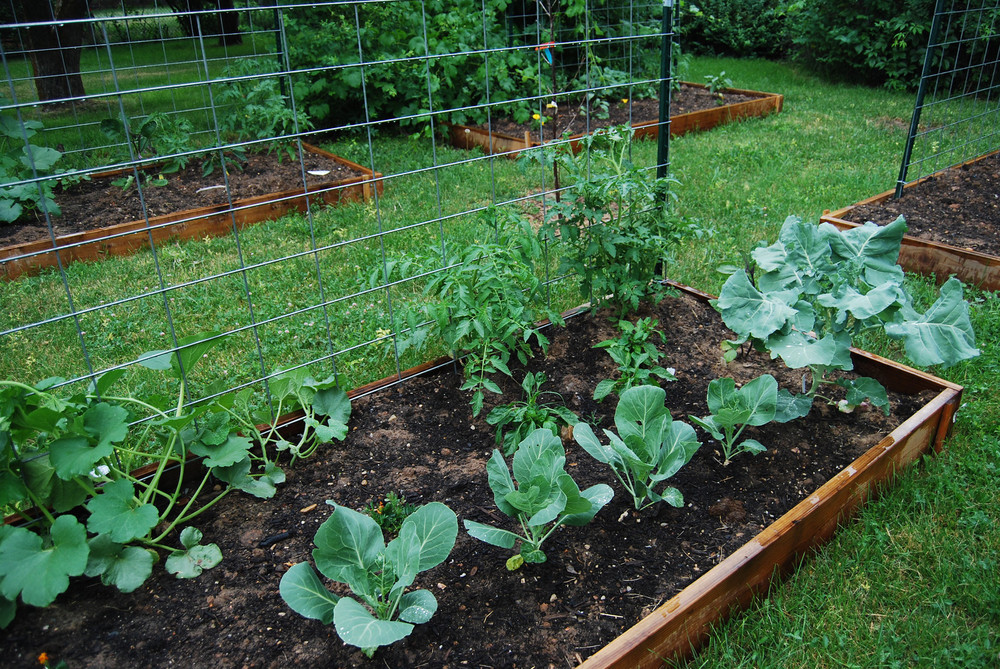 community-gardens-2.jpg