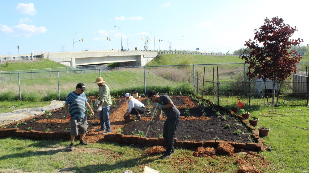 Doing some final touches and cleaning up the site, on the far right are pots full of herbs!