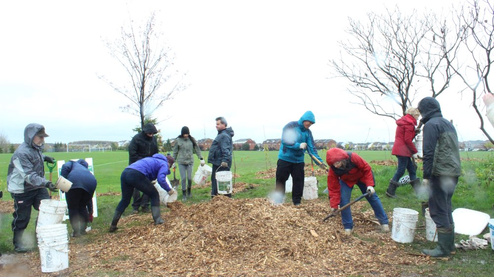 Volunteers spreading mulch to clean up after the planting and to help trees retain water.