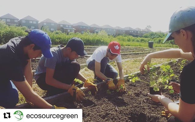 #Repost @ecosourcegreen  Check out Ecosource's farm during the Farm Hop on August 11 from 10am-5pm! Don't miss out on learning more about urban agriculture!! ・・・ Mississauga youth getting their hands dirty to learn about food security and urban ag! We ❤ local. We couldn't do this amazing work without the generosity and support of @ontrillium  #GrownInMississauga #localfood #urbanag #community #organic #youth #volunteer #foodsecurity #dogood #socialgood #urbanag #environment #green #ontrillium