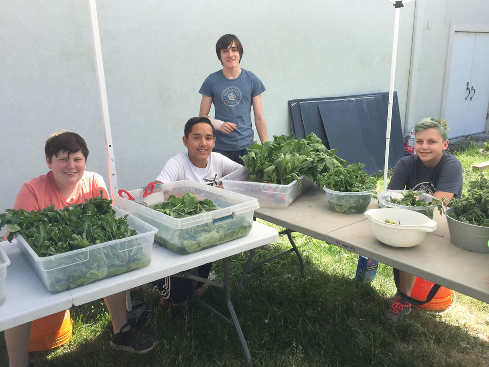 At our CSA Farm, teens learn how to communicate with customers, grow food, and work hard.