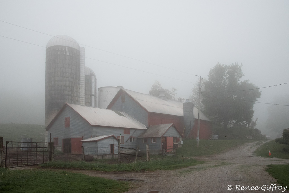 Bromley farm in fog with watermark-1.jpg
