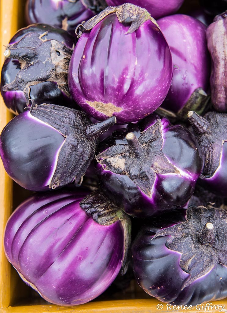 eggplant with watermark-1.jpg