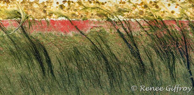 'Marsh'