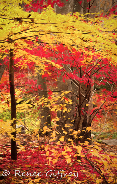 Red and Yellow for web-1.jpg