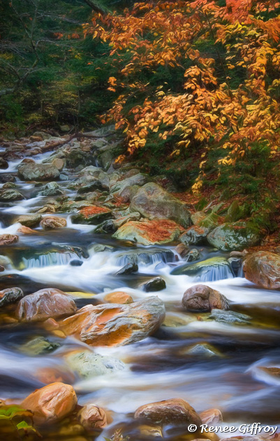 Autumn Stream for Web-1.jpg