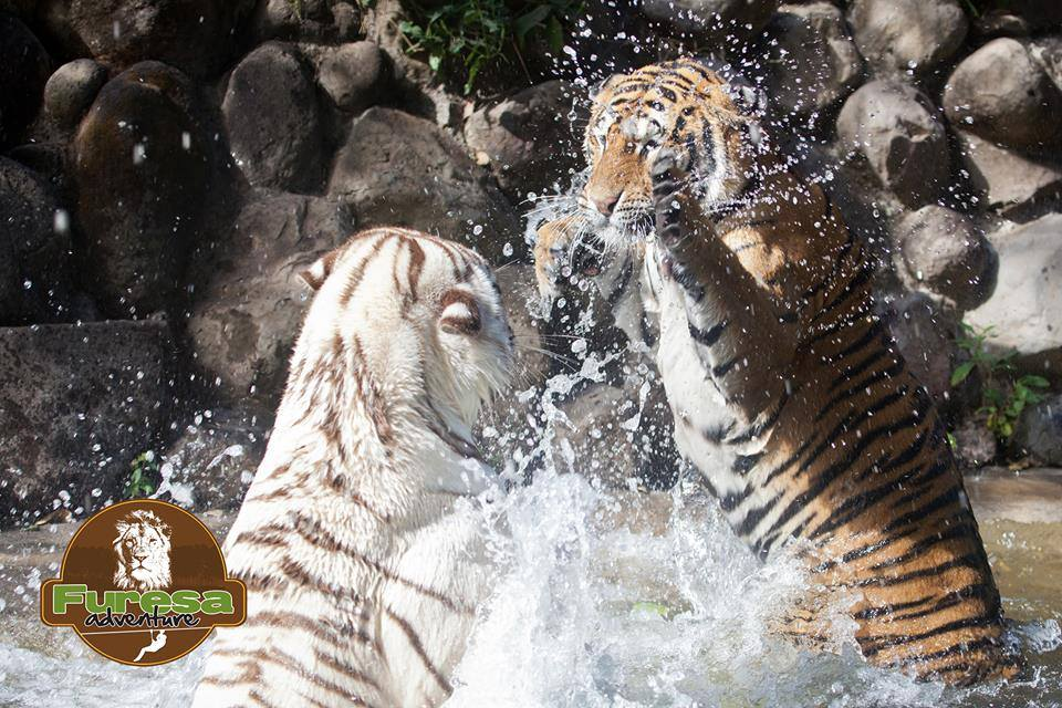 Furesa Zoo