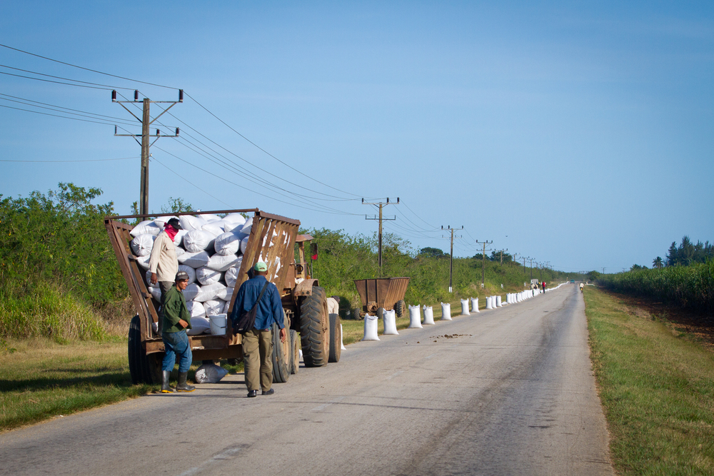 Workers bagging up dried rice on a country road, Cuba