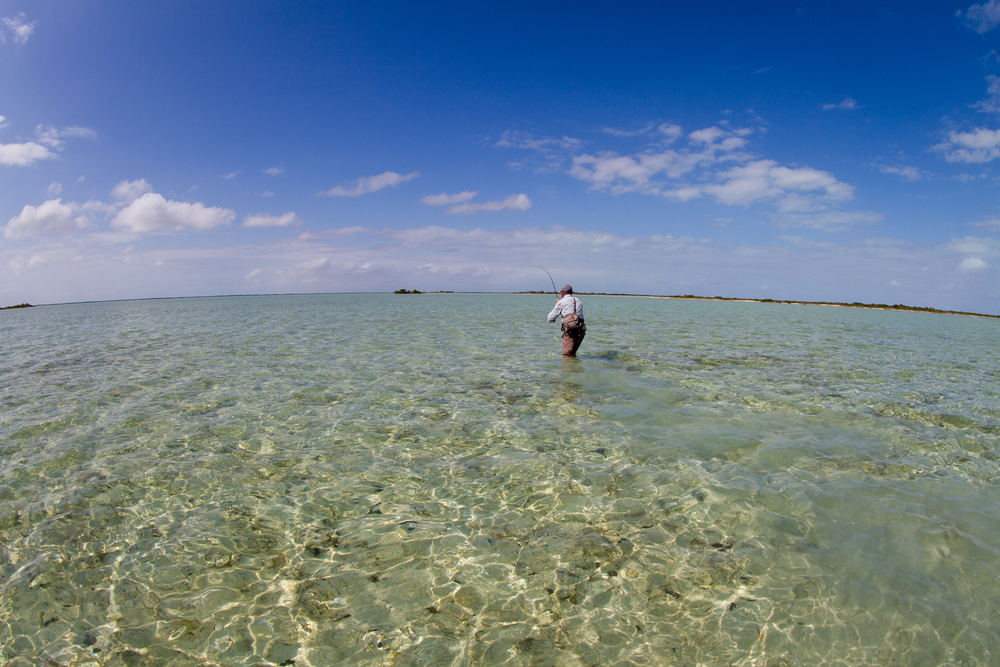Hooked up to a Bonefish on an interior flat, Cayo Cruz, Cuba