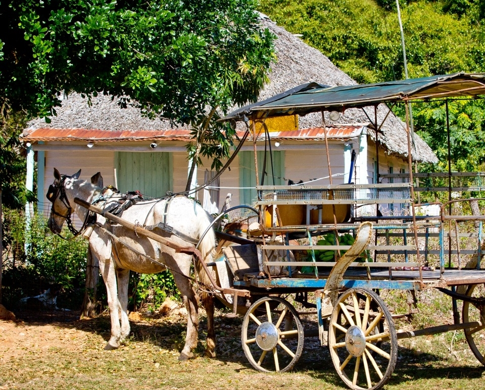 Horse and buggy in the Cuban countryside
