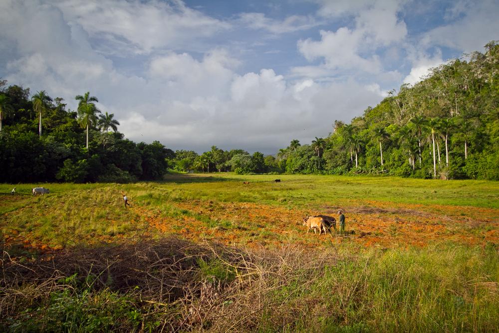 Farm field, Vinales, Cuba
