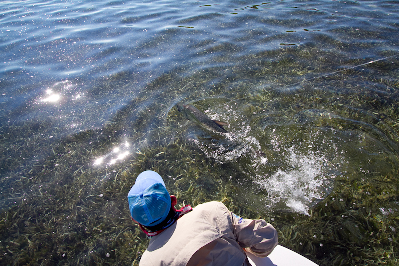 Tarpon about to be landed, Gardens of the King, Cuba