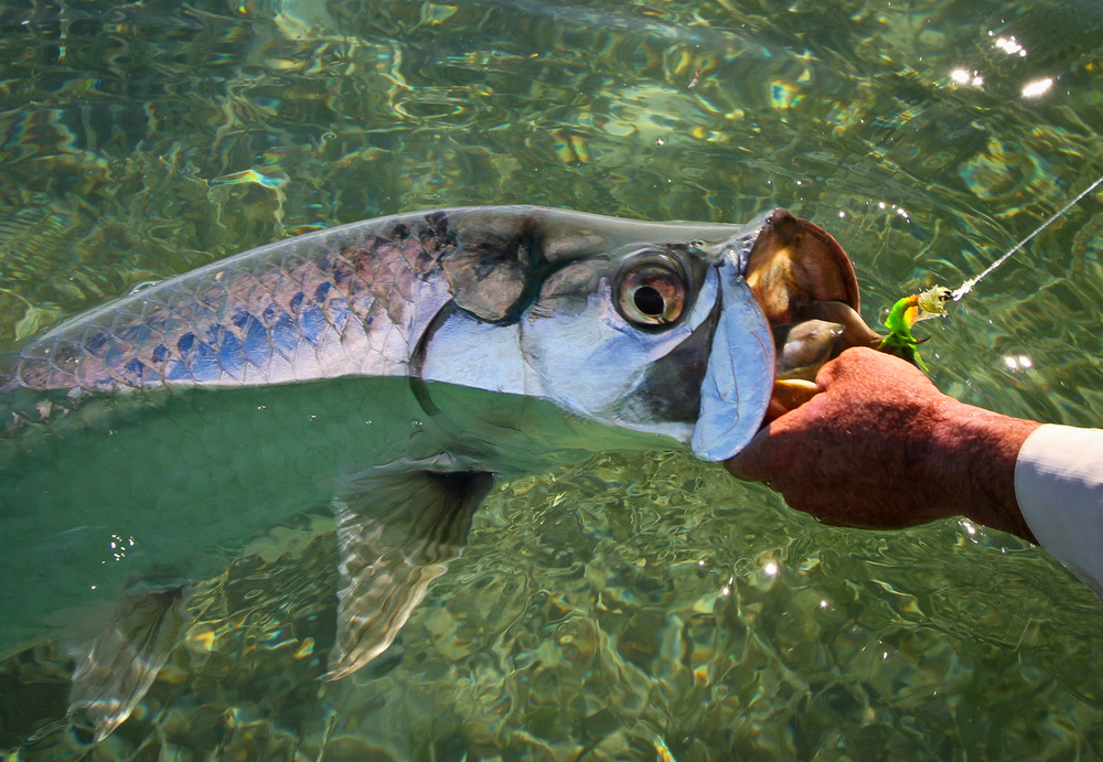 Fly Fishing for Tarpon, Gardens of the King, Cuba