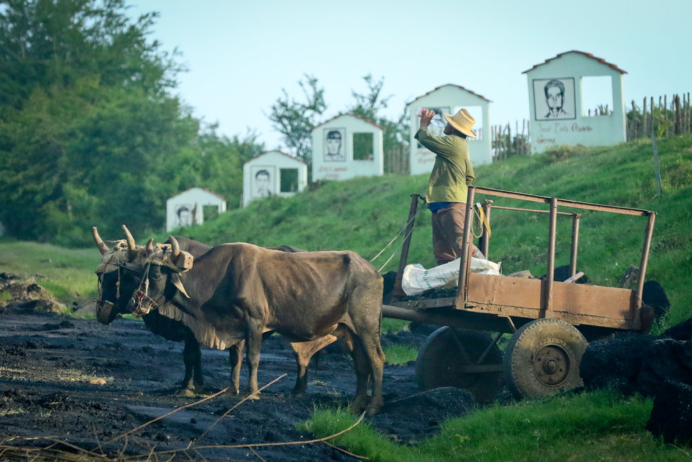 Worker and oxen