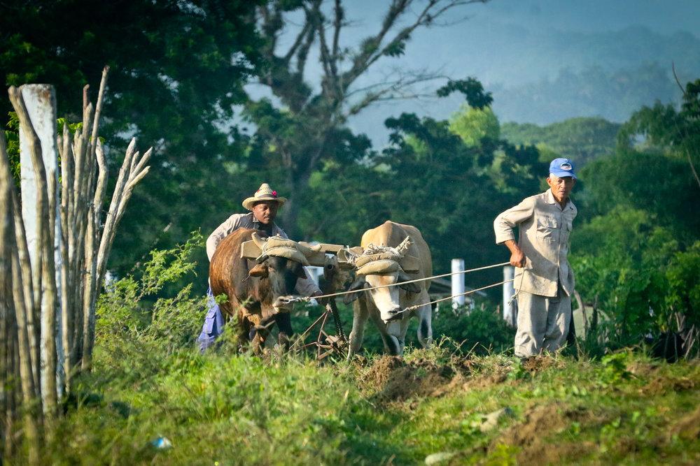 Rural life....