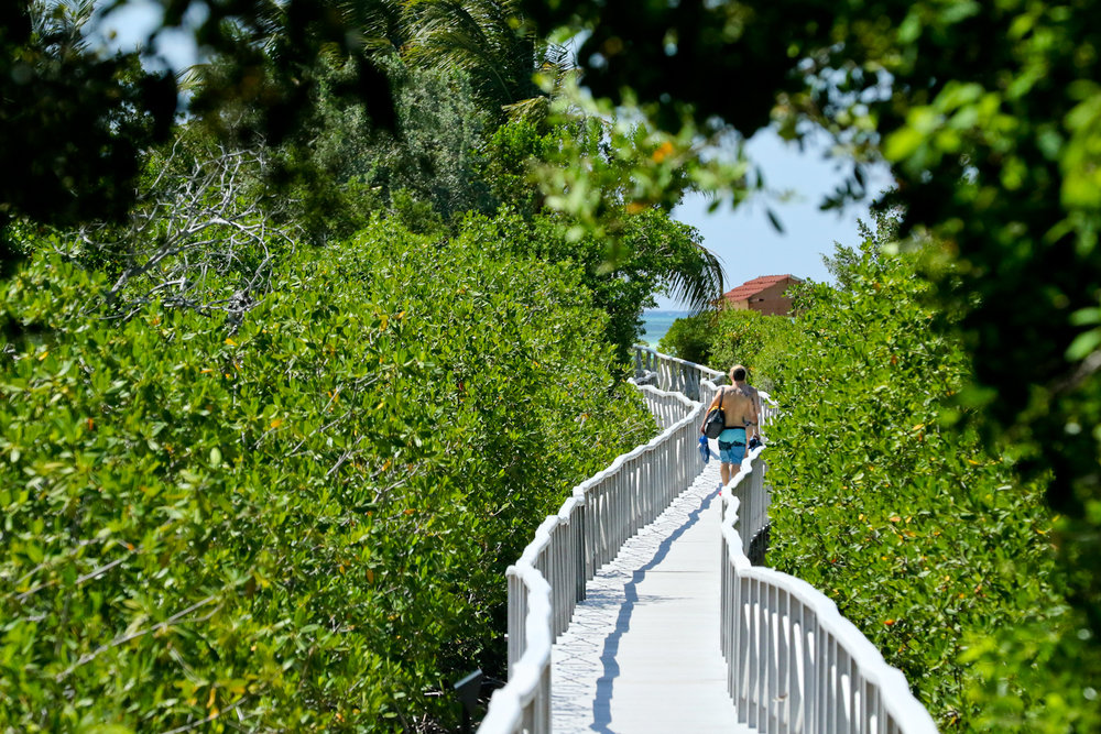 Walkway to the beach......