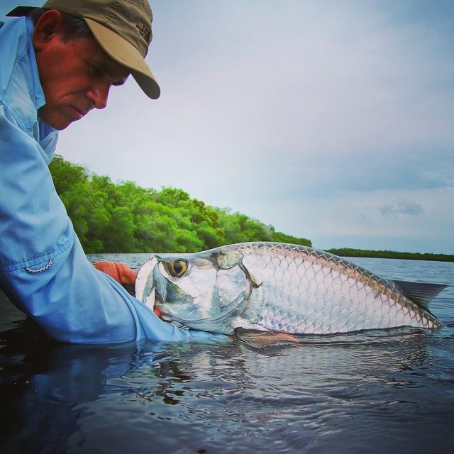 Cuba guide Raciel ready to release a Rio Hatiguanico Tarpon #cubafishingoutfitters#joncovich#flywatertravel#thomas&thomas#galvanreels#flyfishingcuba