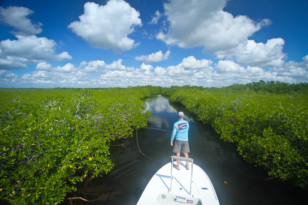 Mangrove channel on the hunt for Tarpon