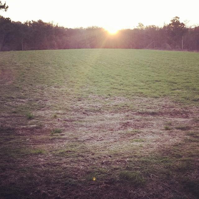 Peaceful green fields at #ironhorsefarmsAL located in Marion, AL