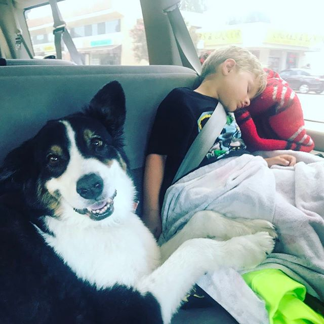 And then sometime it's time for a nap- cuddling with your #bff doesn't hurt... #henry #australianshepherd #aussie #love #dogs #WearThemOut #outsideisfree #californiaboy