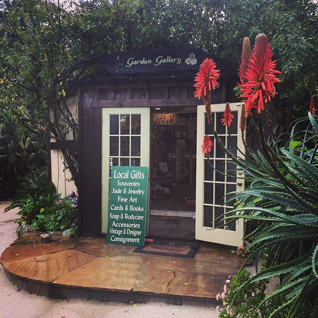 The #aloeplants are in bloom at @lomavistagardens, the warm scent of #espresso from the @bigsurbakery floats in the air, and we're warm and cozy in the shop. Come in out of the rain and see what's new! #BigSurArt #BigSurArtists #ShopLocal #HappyNewYear #RainyDay #HappyPlants
