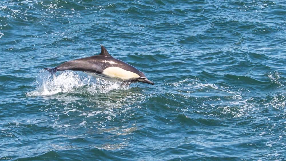 dolphins2.jpg