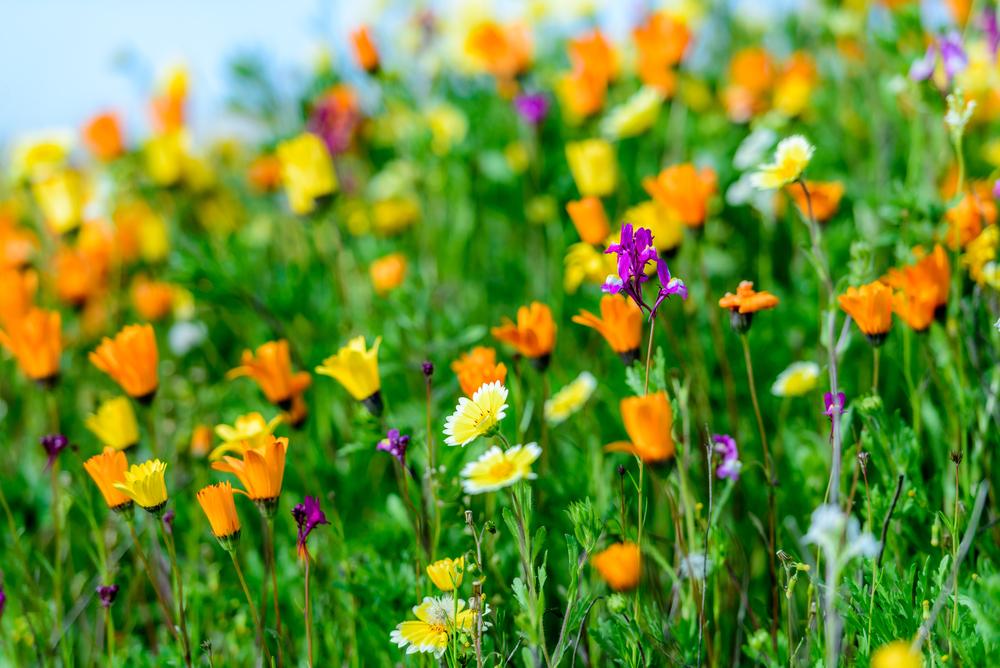 wildflowers-3.jpg
