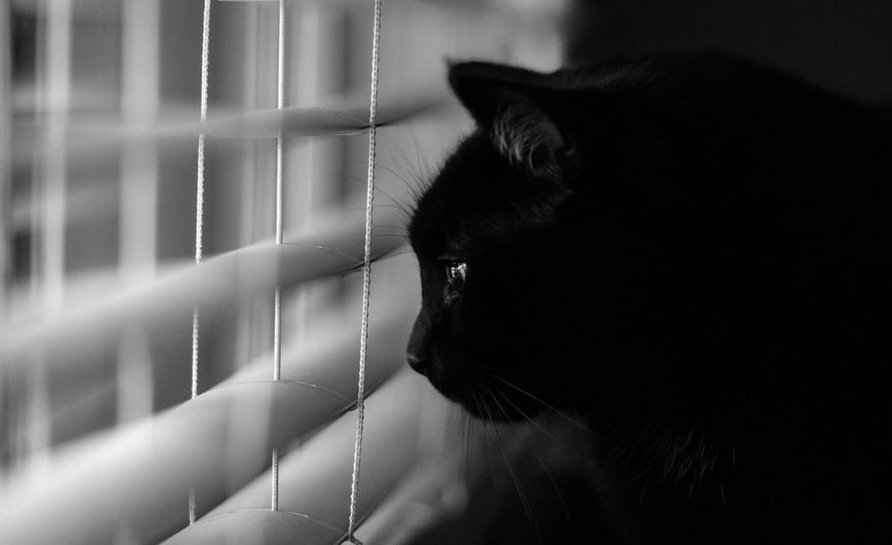 thorty window.jpg