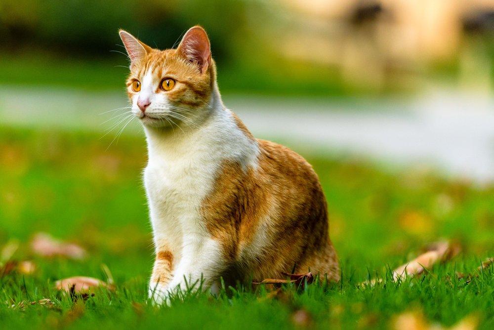 cats-14.jpg