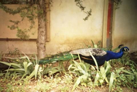 Peacock Dinner | Arcosanti