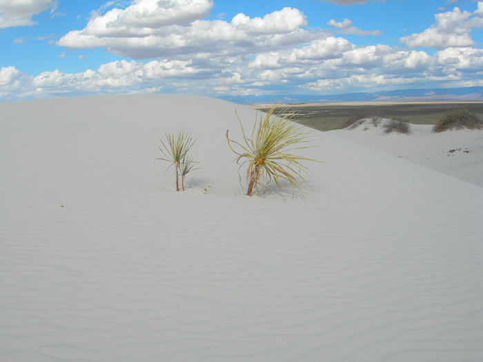 White Sands National Monument | Alamogordo, New Mexico