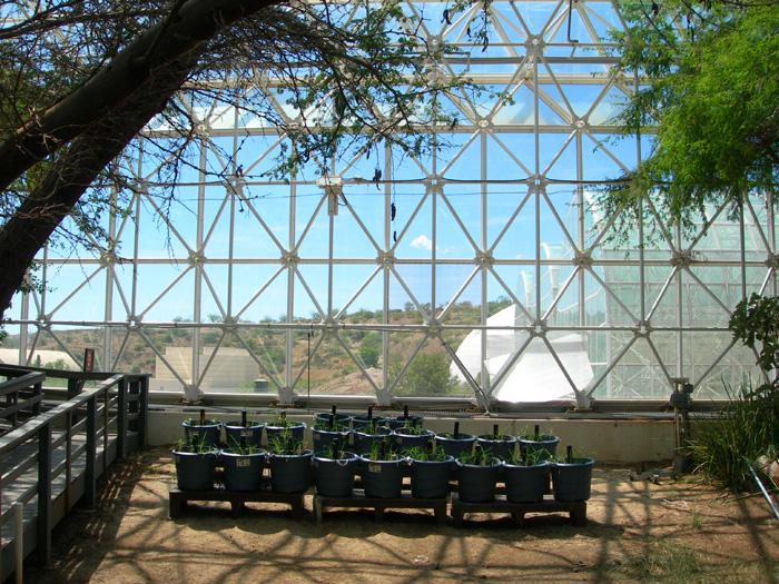 Biosphere 2 | Experiments