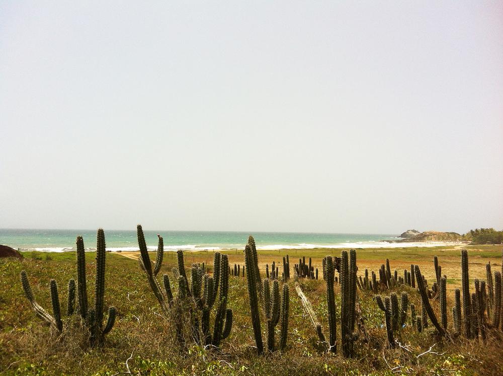 Beachfront cactus