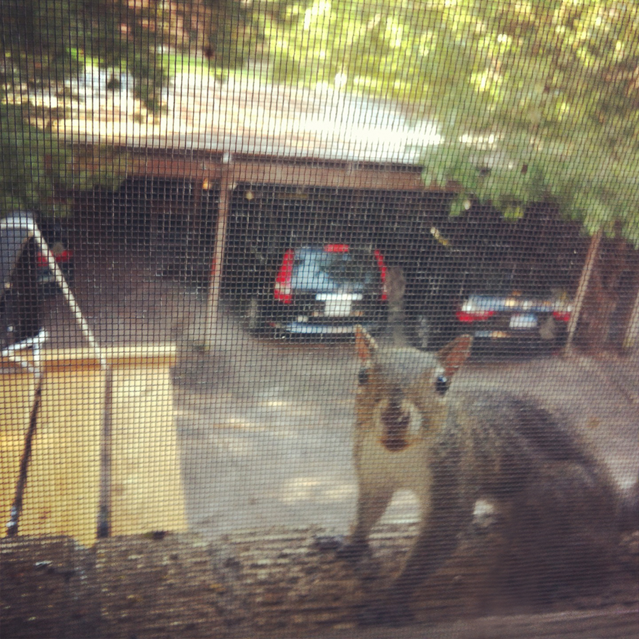 Squirrel at the window
