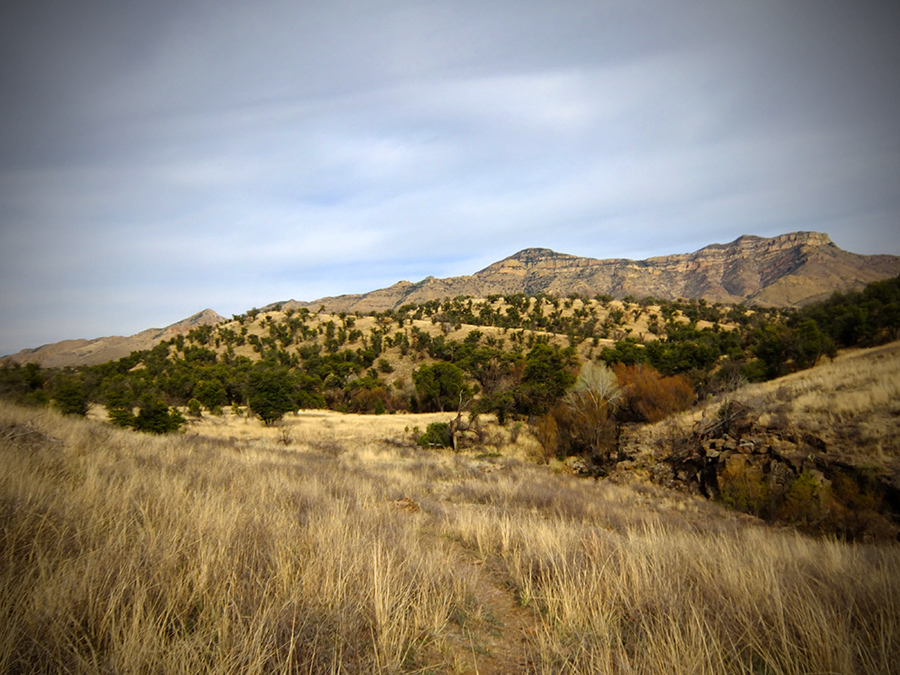 Pajarita Wilderness