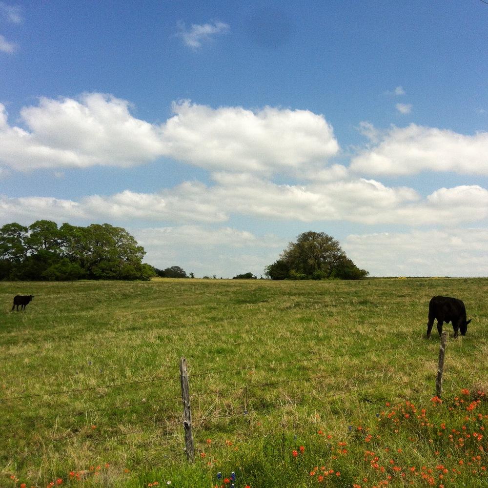 WilWildflower drive / Brenham, TX