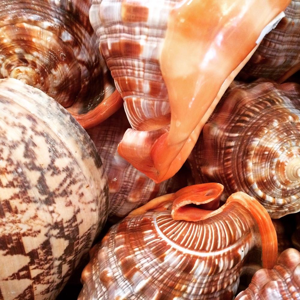 Gift shop shells