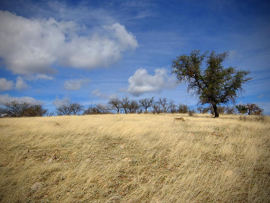 Susannah-Mira_Pajarita-Wilderness-2.jpg