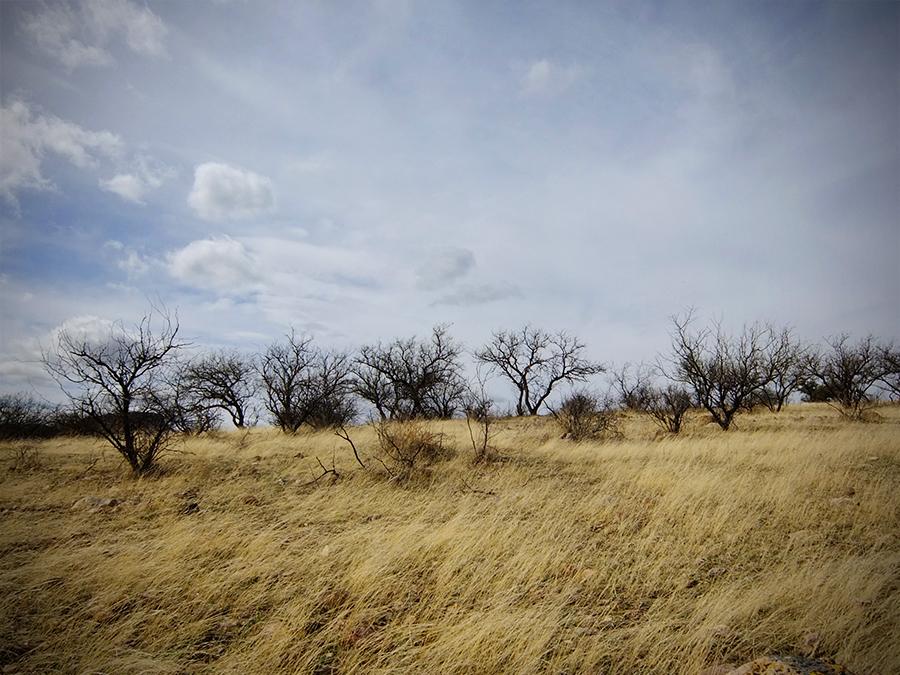 Susannah-Mira_Pajarita-Wilderness-4.jpg