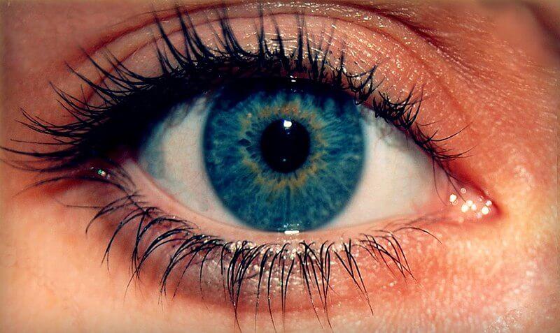 800px-Eyess.jpg
