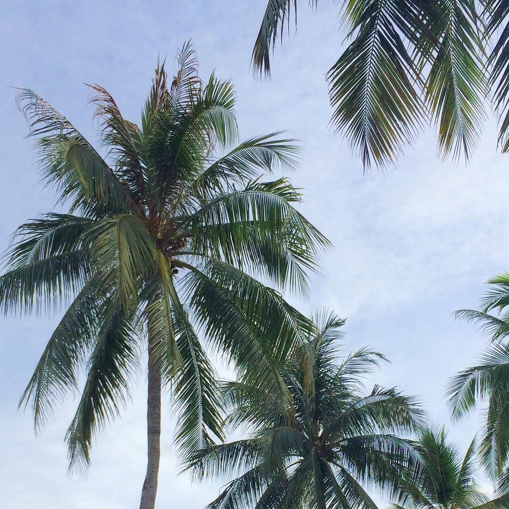 palms_blog.jpg
