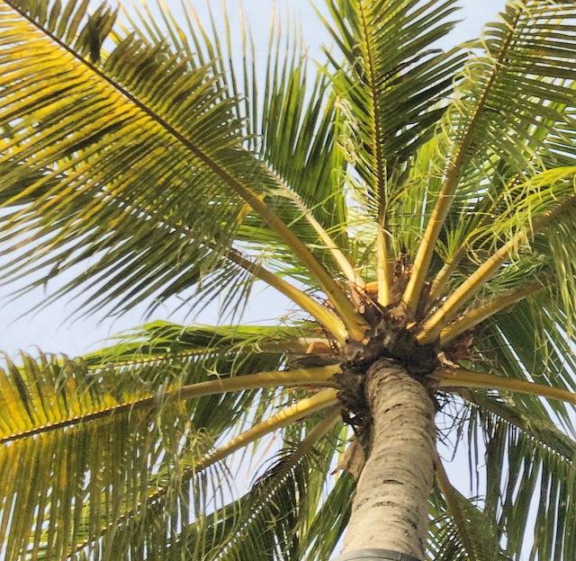 palm3.jpg