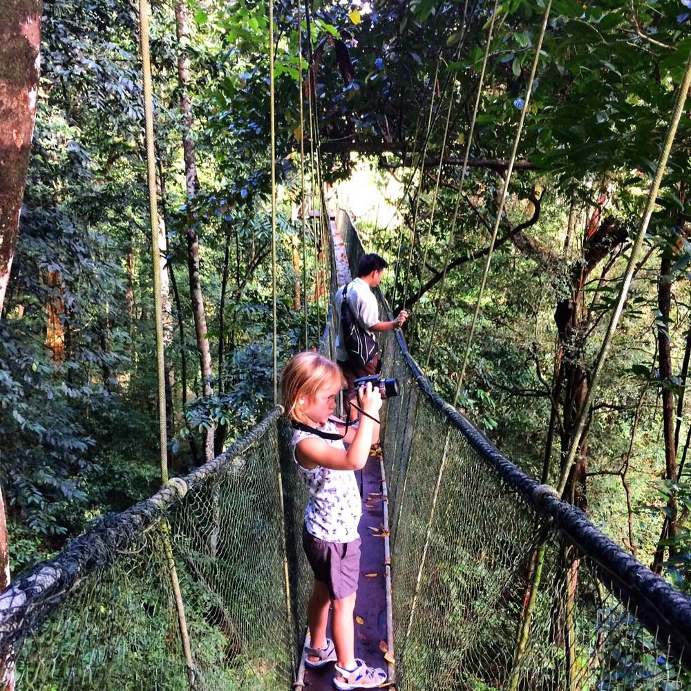 canopy walk.jpg