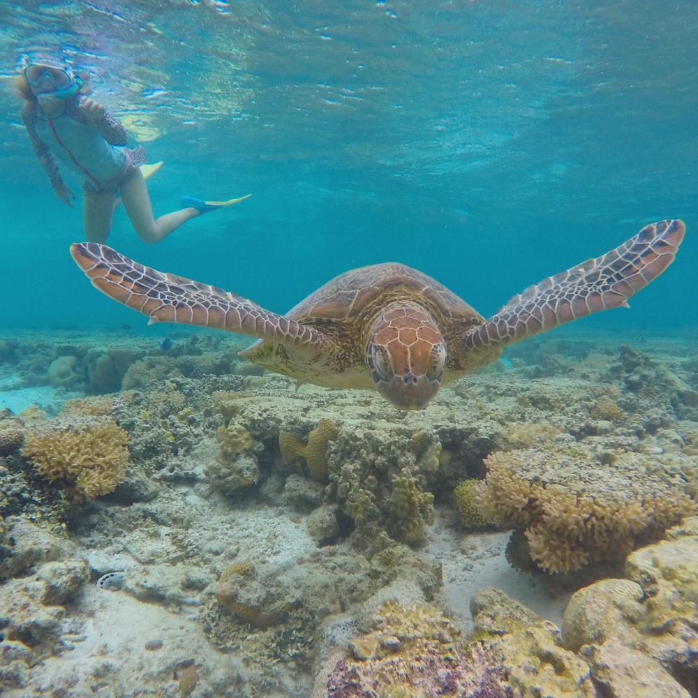 Lady Elliot Island amazingness - for kids, families and couples