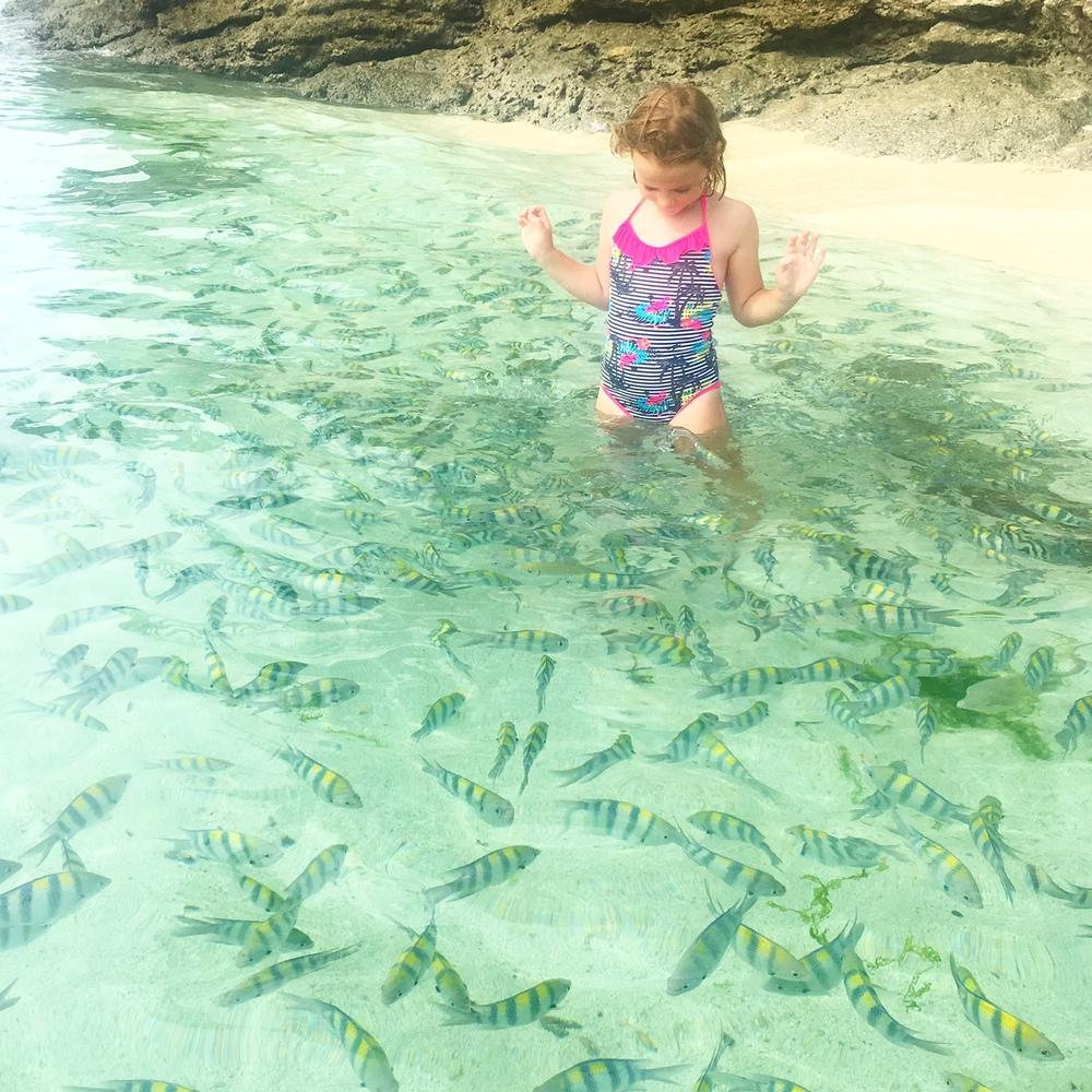 Fish feeding at the beach.