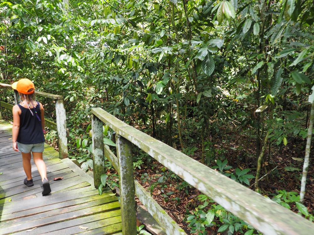 It's a really nice walk through the jungle to the caves - we saw orangutans! So cool!