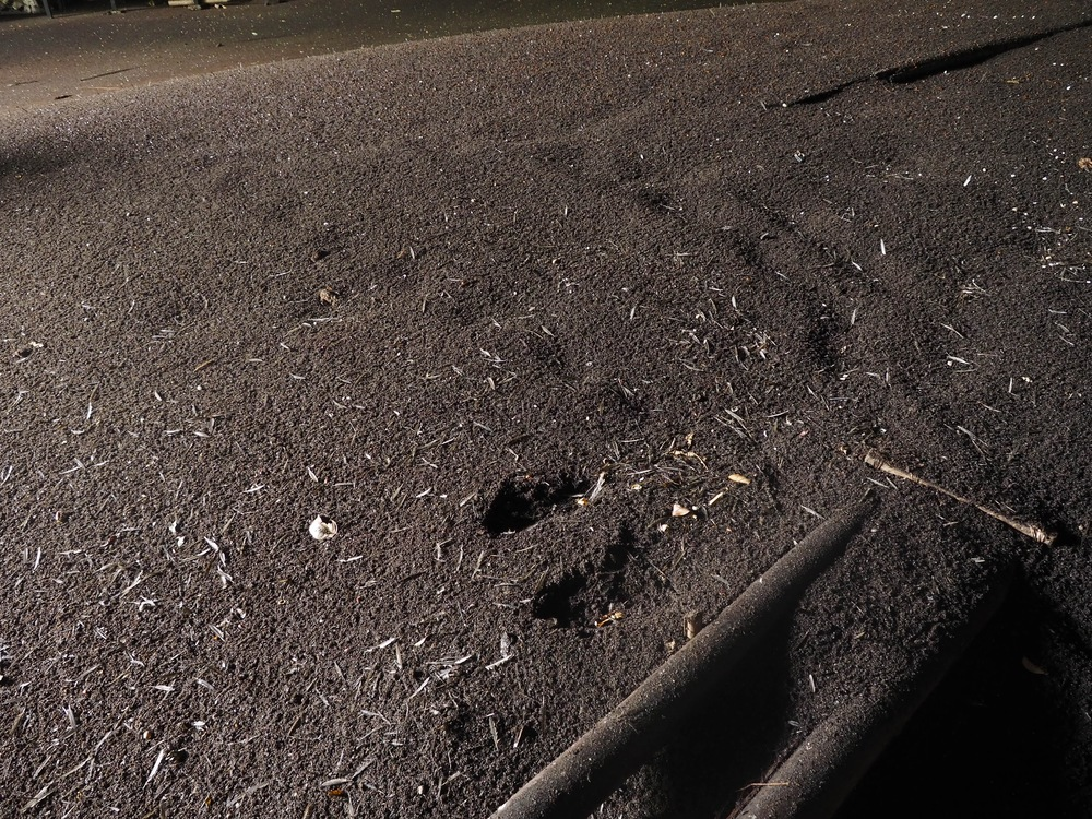 Piles and piles of bat poo and cockroaches omg,,,