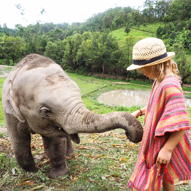 Visist a Chiang Mai elephant park to give rescued elephants some love