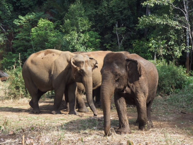 Eles are social and love hanging together